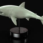 White Shark digital sculpture to be 3D print for Client and made into art and kit.