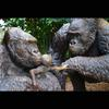 Lowland Gorilla Family-Bronze-Lifesize- Public Commission, Lincoln Park and Louisville Zoo_2001